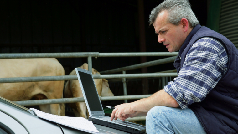 Man on laptop next to cattle pin